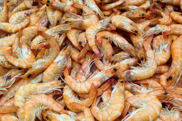The Annual National Shrimp Fest