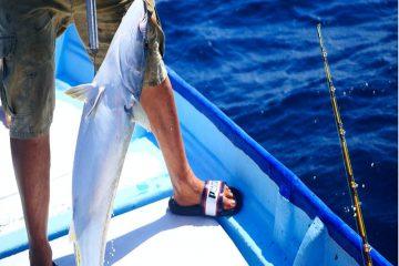 Orange Beach Billfish Classic